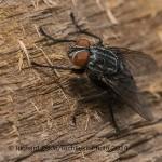 Fly-(4)