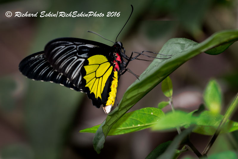 Brookside Garden Butterfly House is open.  Check their website for times; $8 admission.