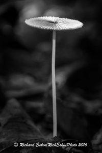 GardenMushroom_D8E_2993