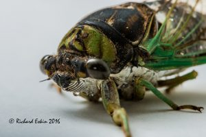 cicada_d8e_3574cprt