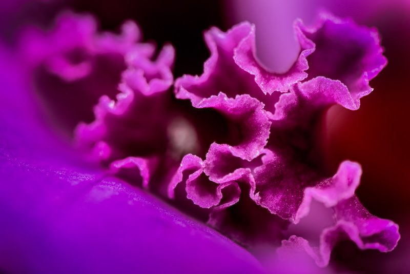 Close-up of the edges of an orchid flower