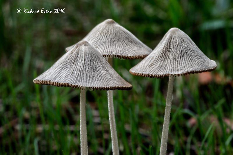 mushrooms_d8e_3509